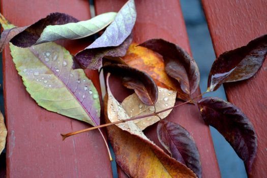 Wet Leaves on a Bench by stridara