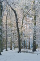 Soft haze in winter woods by steppeland