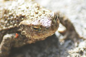 Toad by 1Mathew7