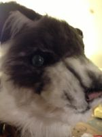WIP fursuit head by WithCandyDancing