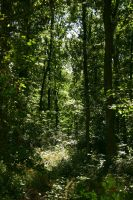 Forest Scenery 2 by LuDa-Stock