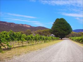 The Gap Vineyard by kayandjay100