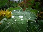 drop of rain by FetterLutz
