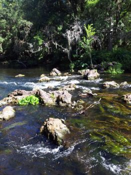 Hike on the Hillsborough River 3 by animalwuva101
