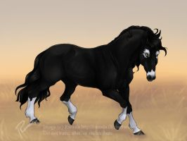 The Stallion by Ramala