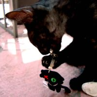 toys for cats and humans by AllNegative