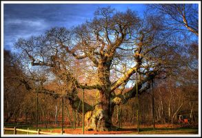 The Major Oak... by TheBaldingOne