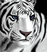 white tiger by charis-