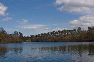 Lake and Trees by Sheiabah-Stock