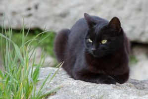 Black Cat by andreym24
