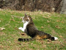 Kitteh in deh Grass by 4ever-rider