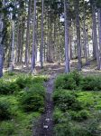 Way to the Forest by Roky320