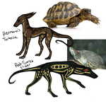 Hermann's Tortoise + Red Eared Slider Reptus Dogs by TripleThreatKennels