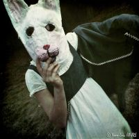 And if the Rabbit was Alice ? by ylf13