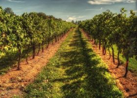 Vineyard Row by ShawnaMac