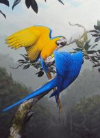 Macaws by AnahitaPhae