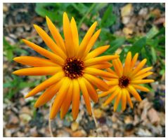 Autumn flowers by jankolas