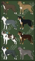 American Pitbull Imports: CLOSED by Sedillo-Kennels
