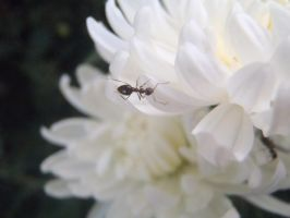 Ant by Mihaela7
