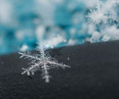 Snow Flake by Arrowlassphoto