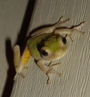 Is this close enough by MistressVampy