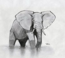 African Elephant by RobtheDoodler