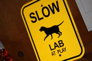 Slow lab at play by FerretsUSA