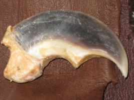 smaller polar claw SOLD by lamelobo