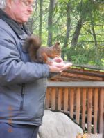 squirrel eating from mans hand by Cylinda4Ever