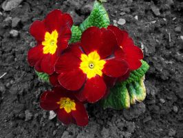 Red and yellow flower by Brianetta