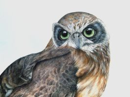 Owl 02 (finished)(2015) by Hanne0303