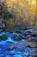 Cottonwood Creek by mjohanson