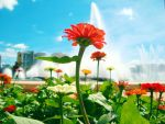Sunny Day I by sweetcafe