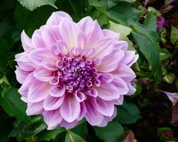 Purple and White Flower by dseomn