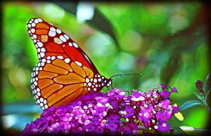 butterfly greeting card by Moon-Willow
