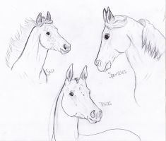 Horse Practice 1 by BamaBelle2012