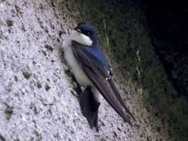 hanging out housemartin by harrietbaxter
