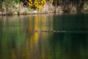 Ducks in a row by JimPMM