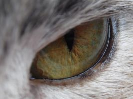 ~My Cat's Eye~ by Greypaw-Cat