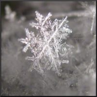 :snow flake: by WorldWar-Tori