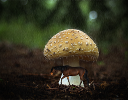 sheltered by xglassraindrops
