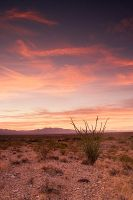 Desert Sunset by steverobles