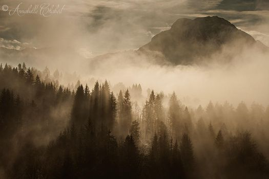 Misty by Annabelle-Chabert