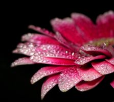 Pink Droplets_1 by Mixdown13