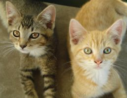Kitty Sessions-Bella and Jacob by Lady-Trevelyan