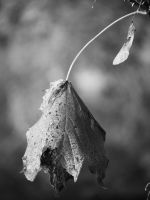 a Leaf by sej