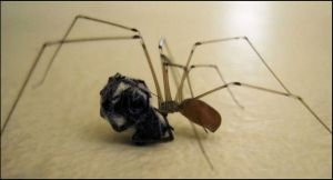Daddy-long-legs eating another spider by greenzaku