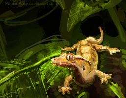 Crested Gecko by PookiePony