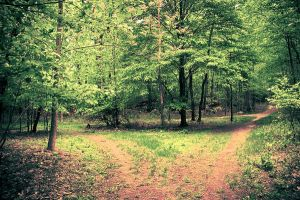 Two Paths Gradient by ukeHippie