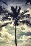 Bahama Palm Tree by mskrissi87